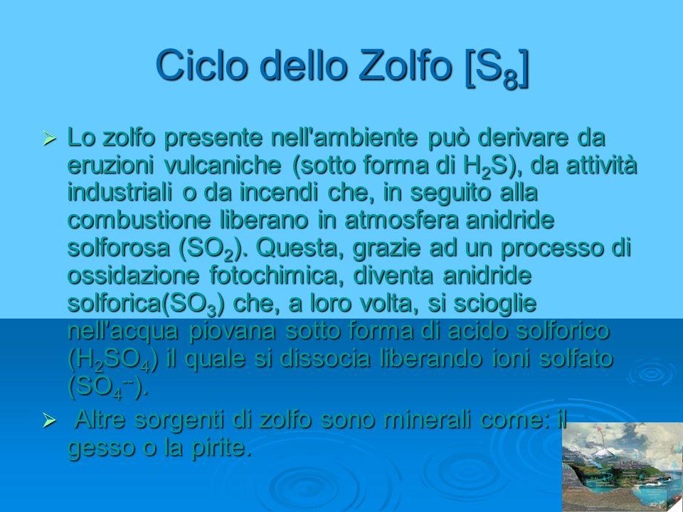 Ciclo dello Zolfo [S8]